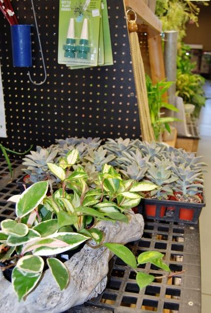 Gazing Globes   Fairy Garden   Garden Flags & Benches   Flowers & Gifts