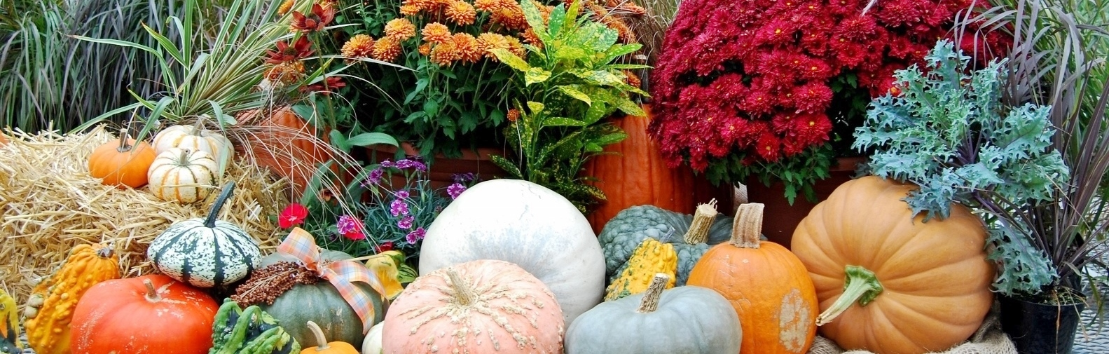 fall decor with living items