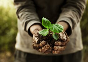 Person holding new plant in dirt in their hands
