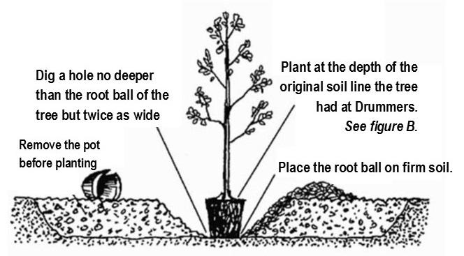 Tree planting hole art