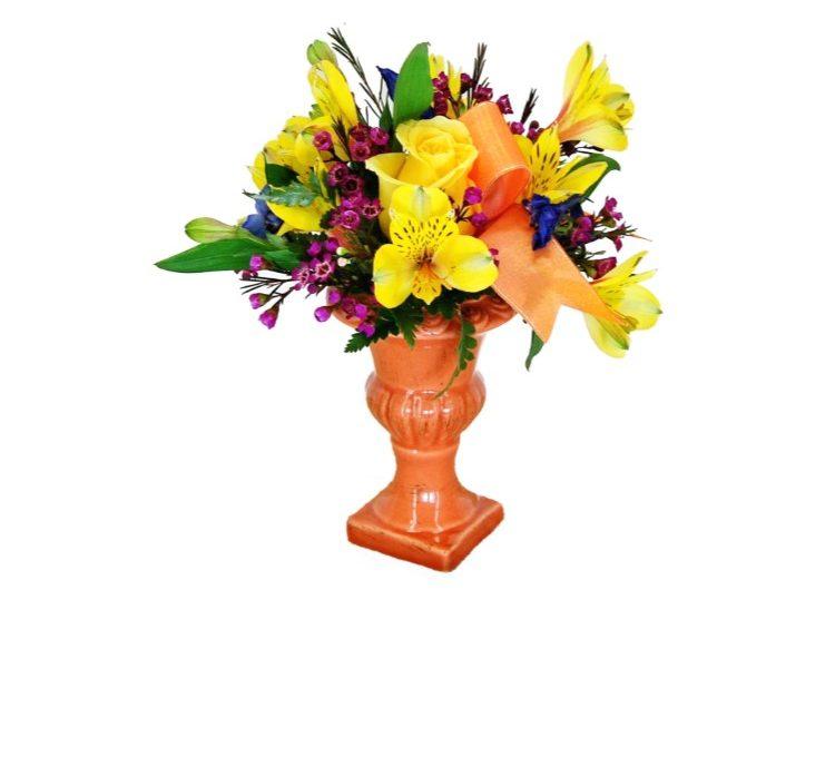 Thank You Just Because Plants Dwarf Shefflerea Houseplant Roses Holidays Wedding Flowers