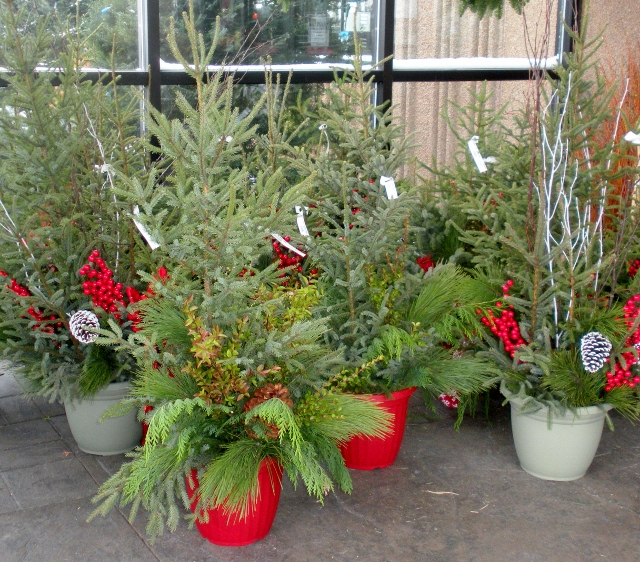 Make a Spruce Top Pot
