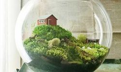 Terrarium with a house in it