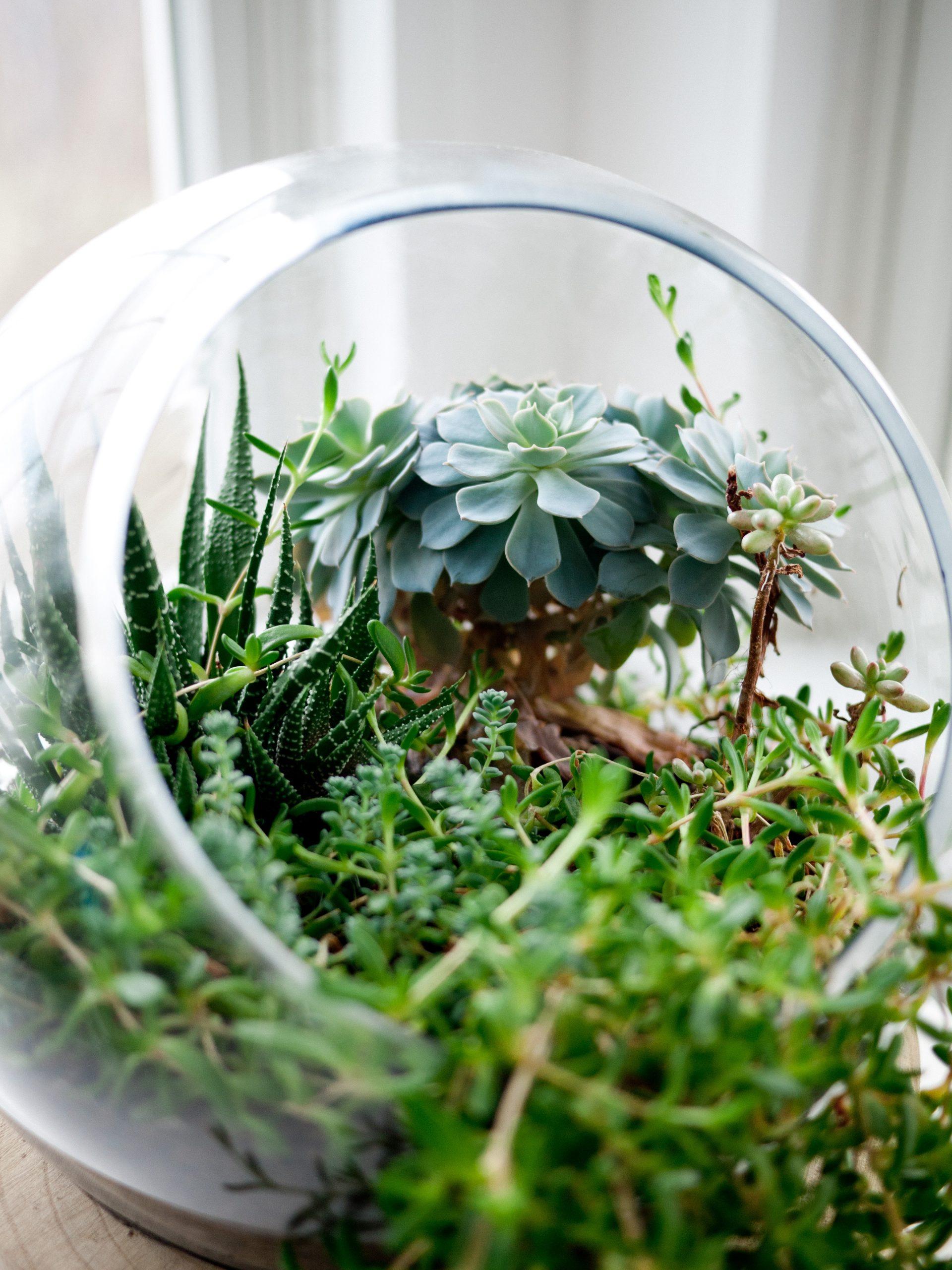 Create A Mini Garden Or Terrarium Nov