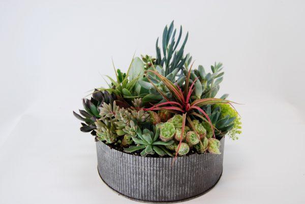 succulent arrangement in metal container