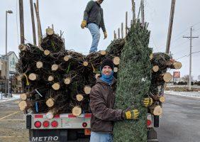 Christmas tree arrival- unloading