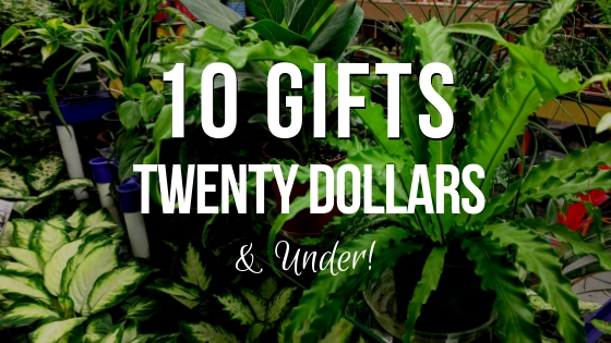 10 Gifts $20 and under