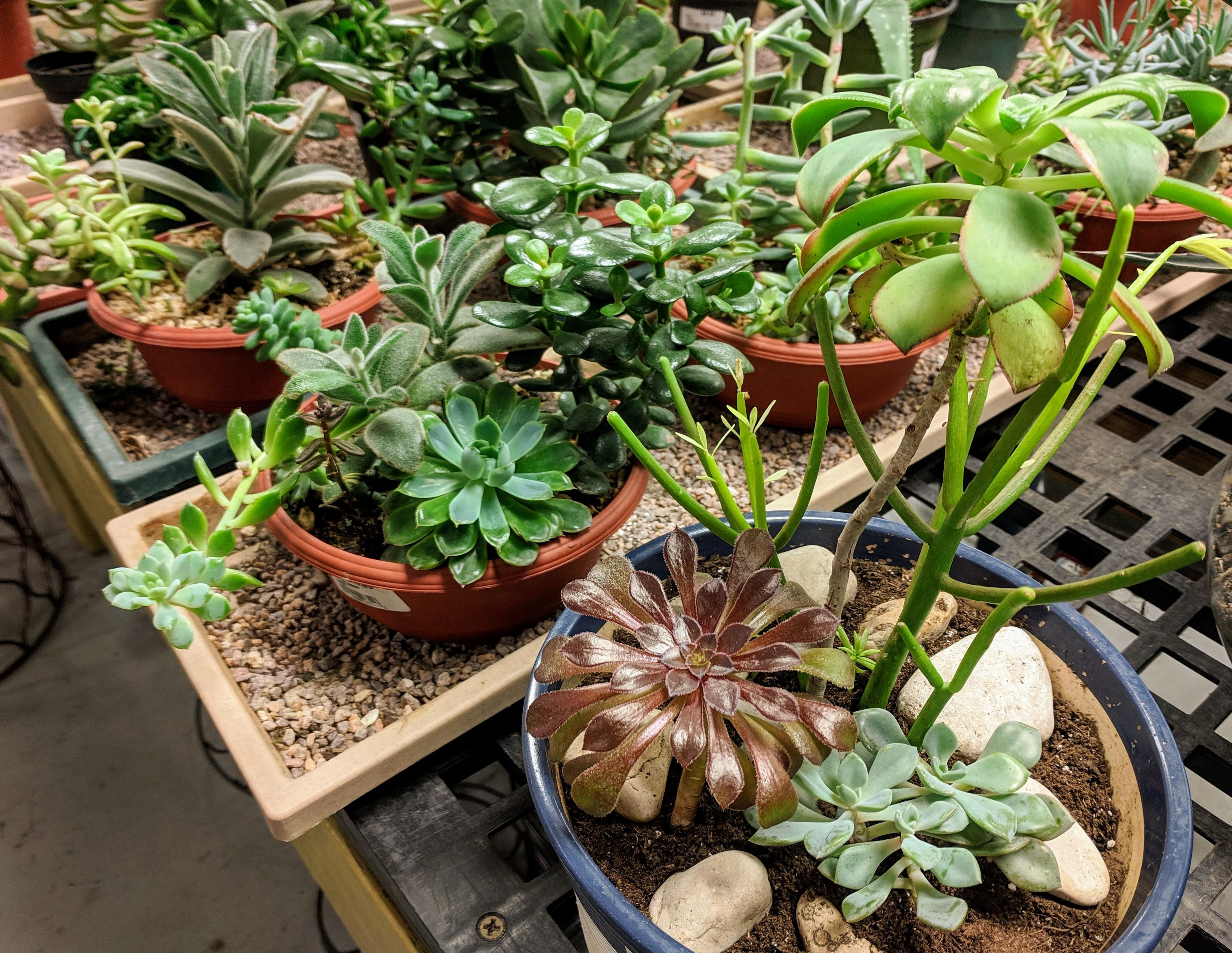 mixed succulent containers for twenty dollars