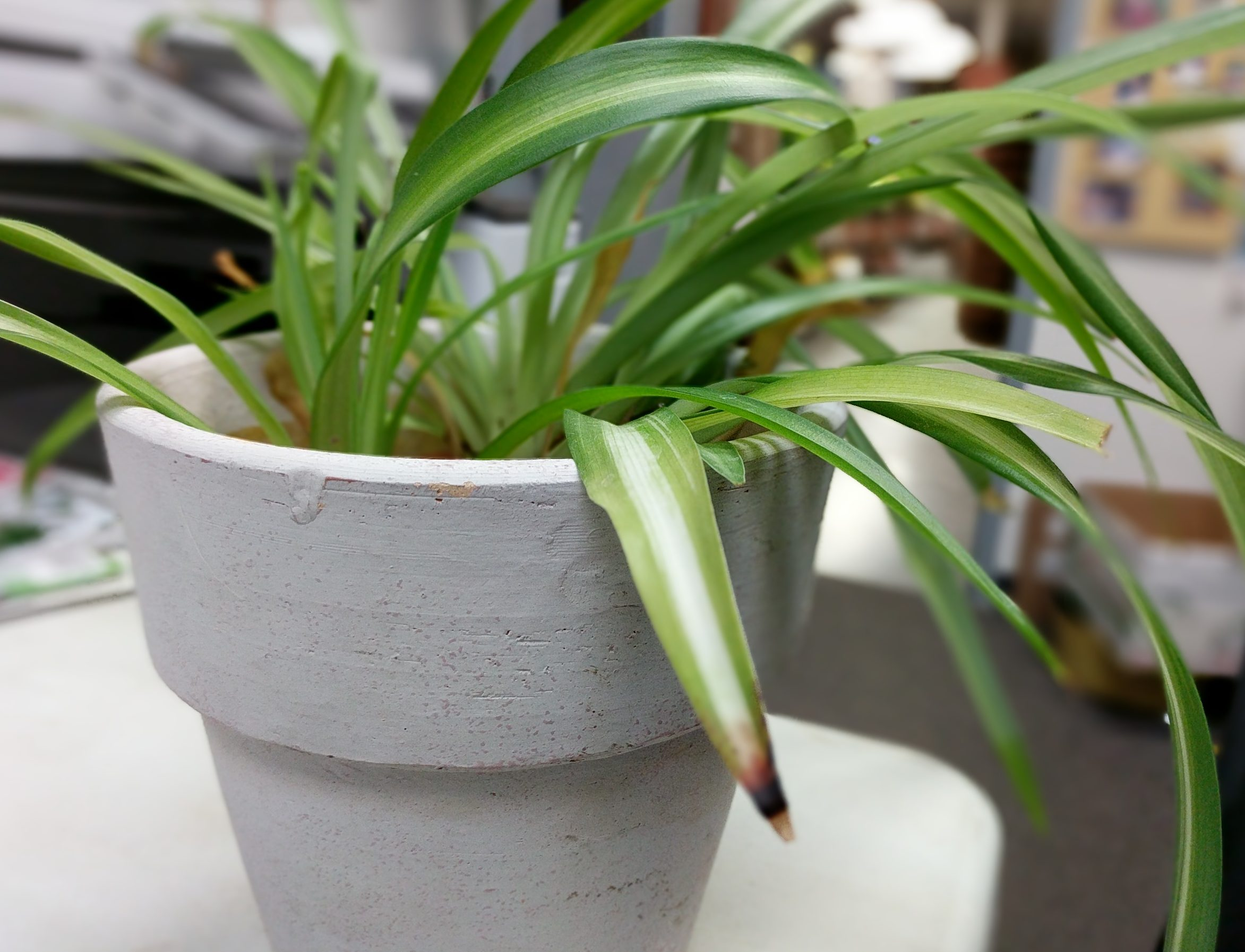 houseplant issues