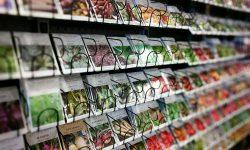 growing seeds on store shelf