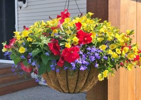 2018 Best of Bunch Spring Planting Party Winner