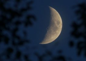 moon in the sky with tree silouettes