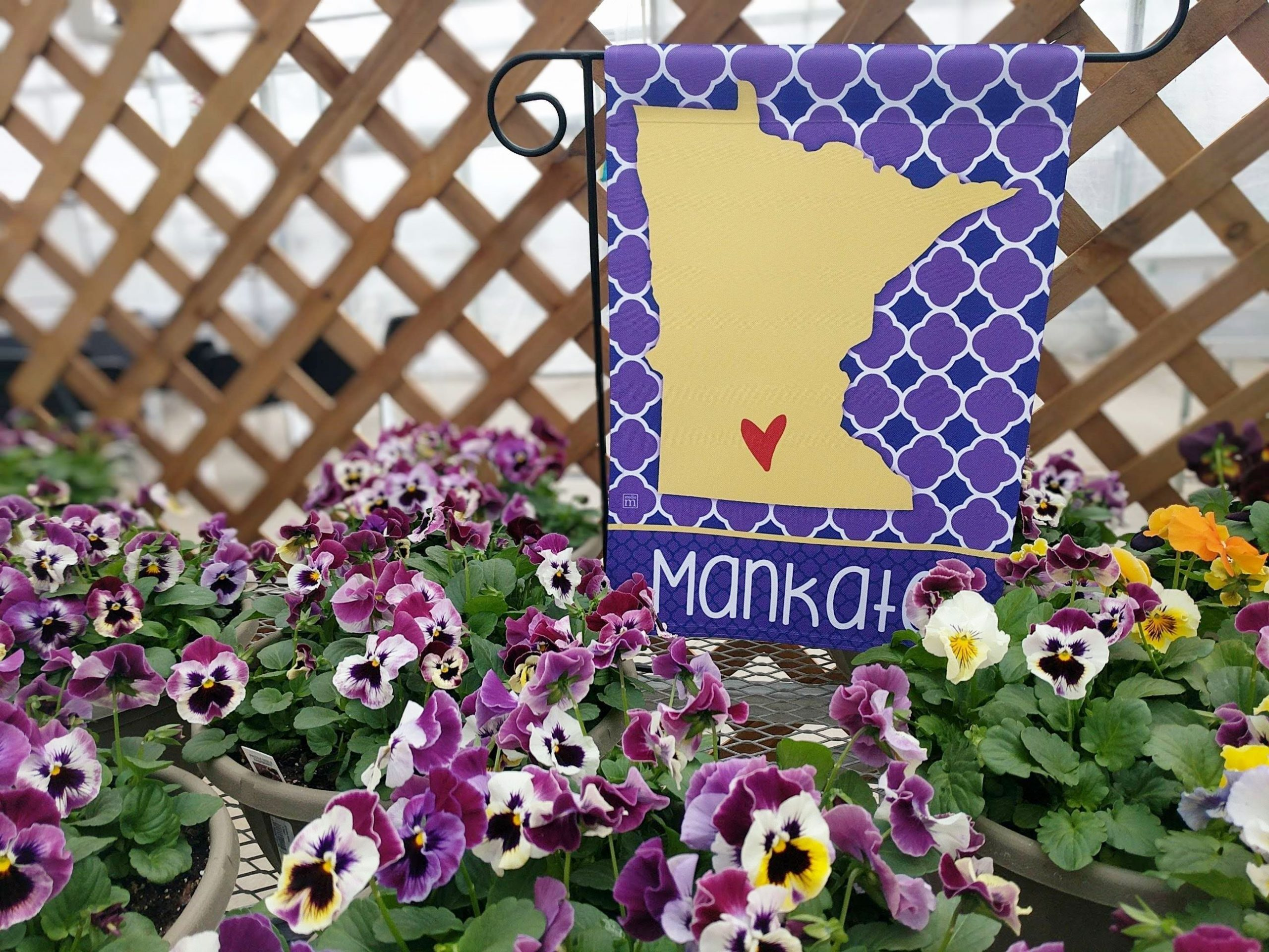 purple and yellow pansies in front of a purple and yellow yard flag with minnesota on it and a heart where mankato is.