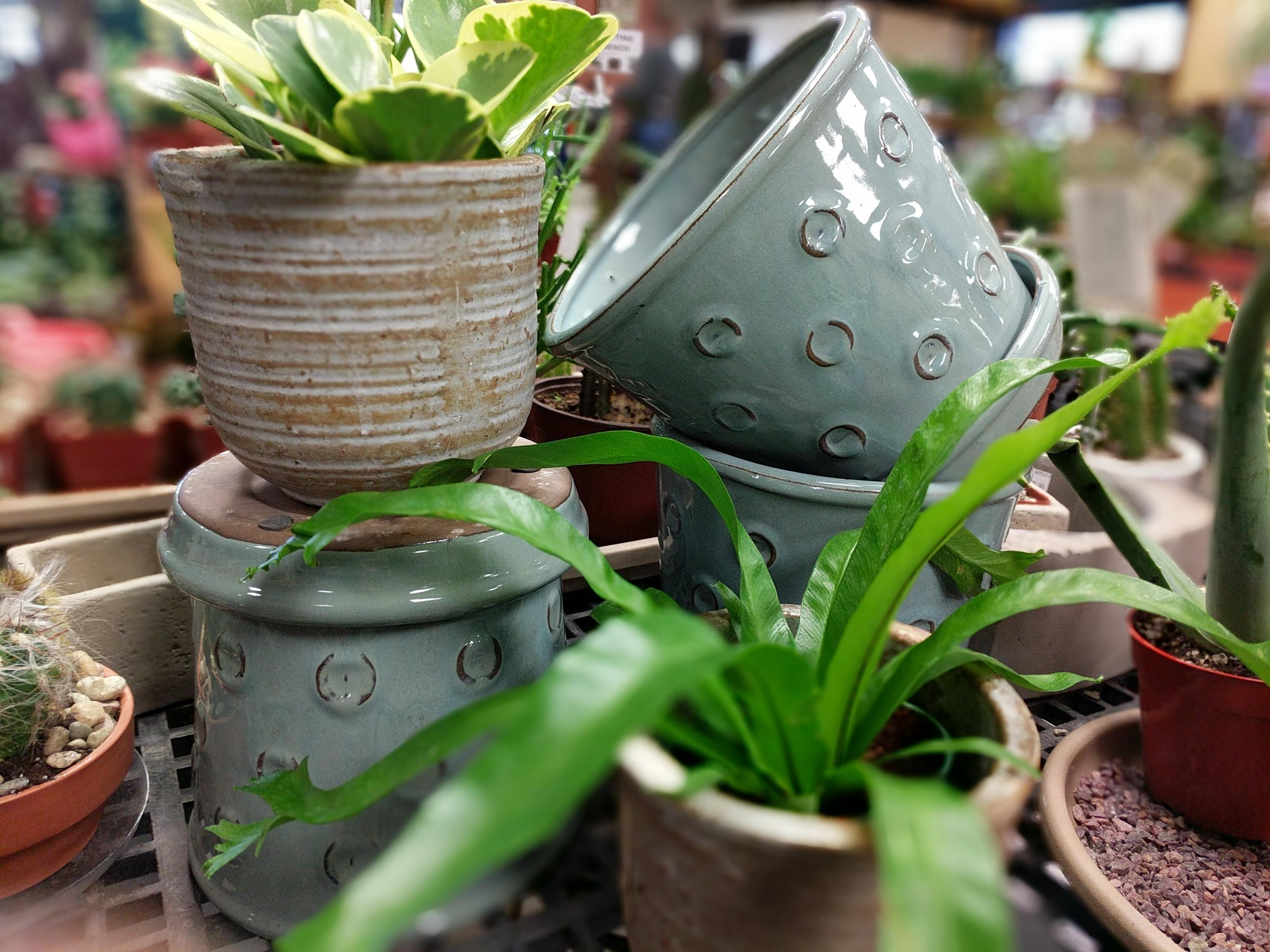 ceramic pottery with plants