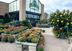 Front of Drummers Garden Center and Floral with blooming mums and Hibiscus