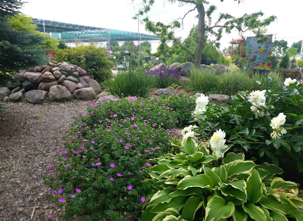 perennial display garden