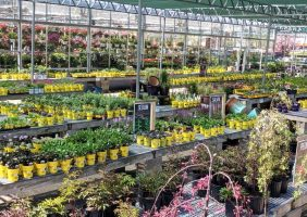Perennials sun area
