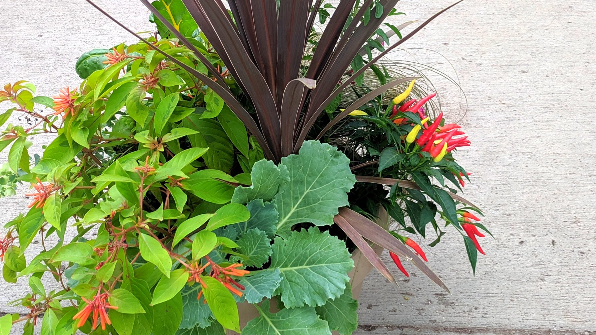 Mankato Garden Center | Landscape Design | Flowers Online