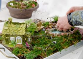 mini gardens in various containers