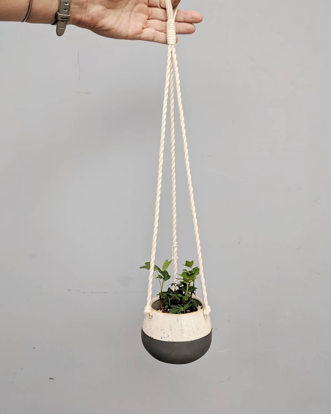 Small terrarium ivy in a modern ceramic hanging pot
