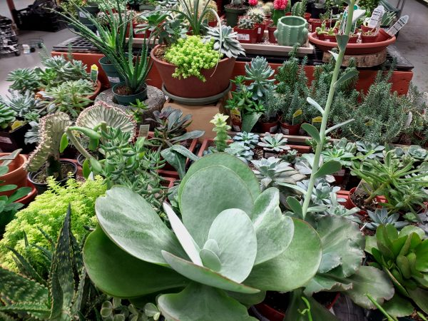 variety of succulents and cacti and on table