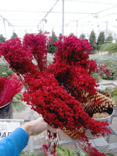 red broom bloom bundle for outdoor or indoor decorations