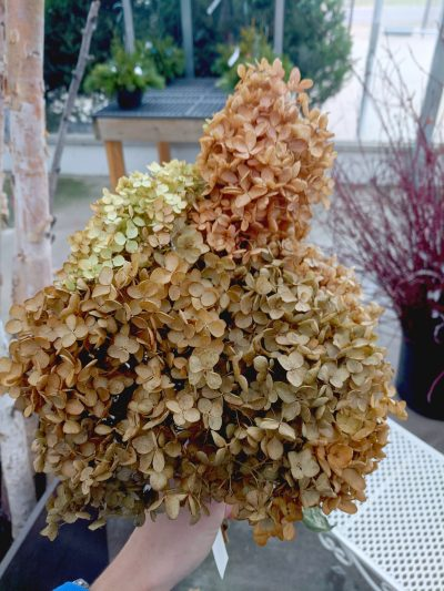 dried hydrangea flower bundle for outdoor or indoor decorations