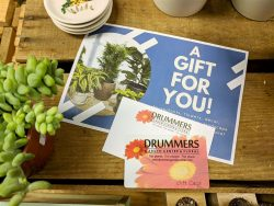gift card with A gift for you! letter and a donkey tail succulent