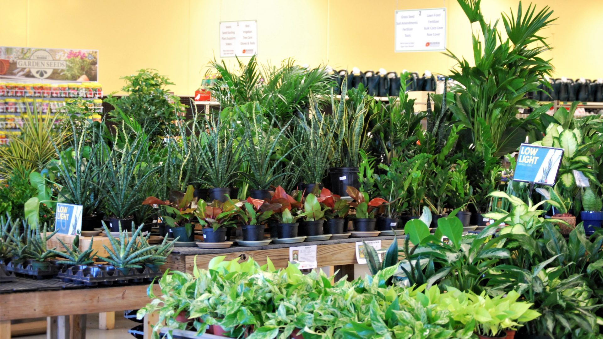 array of houseplants that just came in January 2020