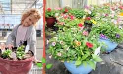 girl finishing up her annual flower pot and flower filled containers in greenhouse