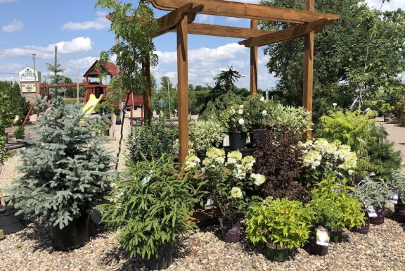 shrub lot display in july