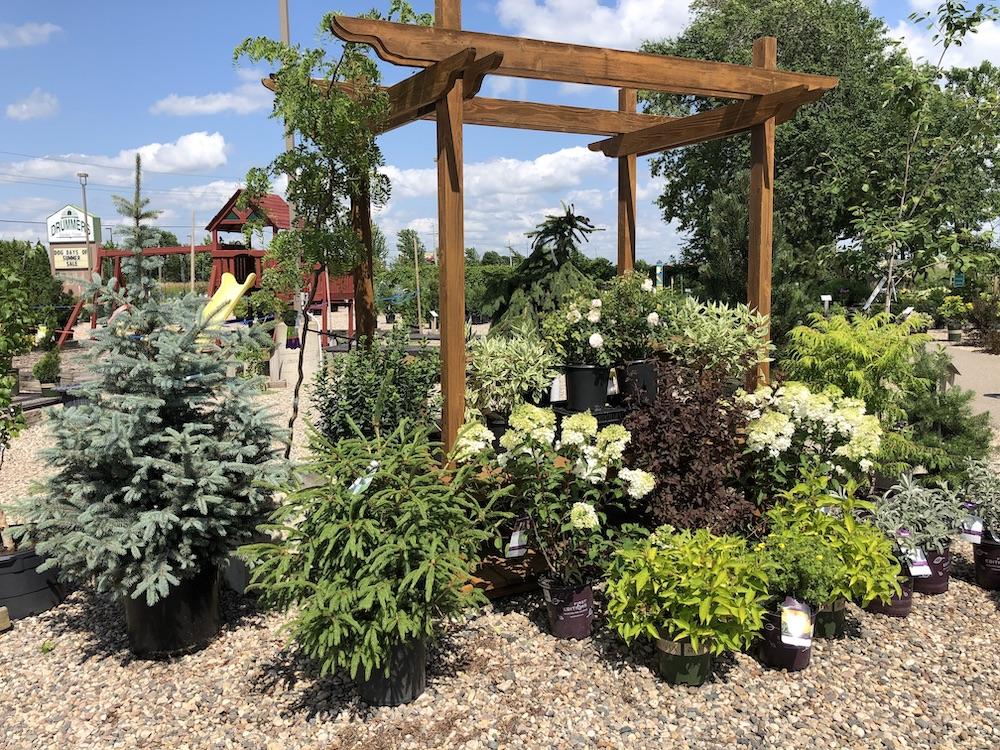 shrub lot display in july