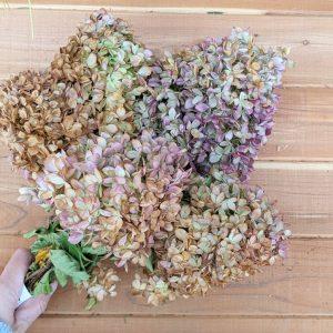 dried hydrangea bundle