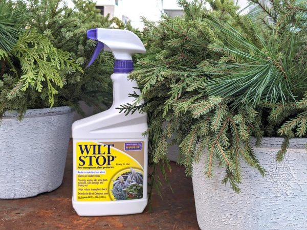 Wilt Stop spray bottle among evergreen decor
