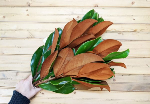 magnolia bunch