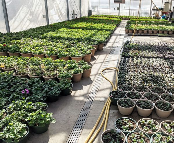 retail greenhouse is filling up