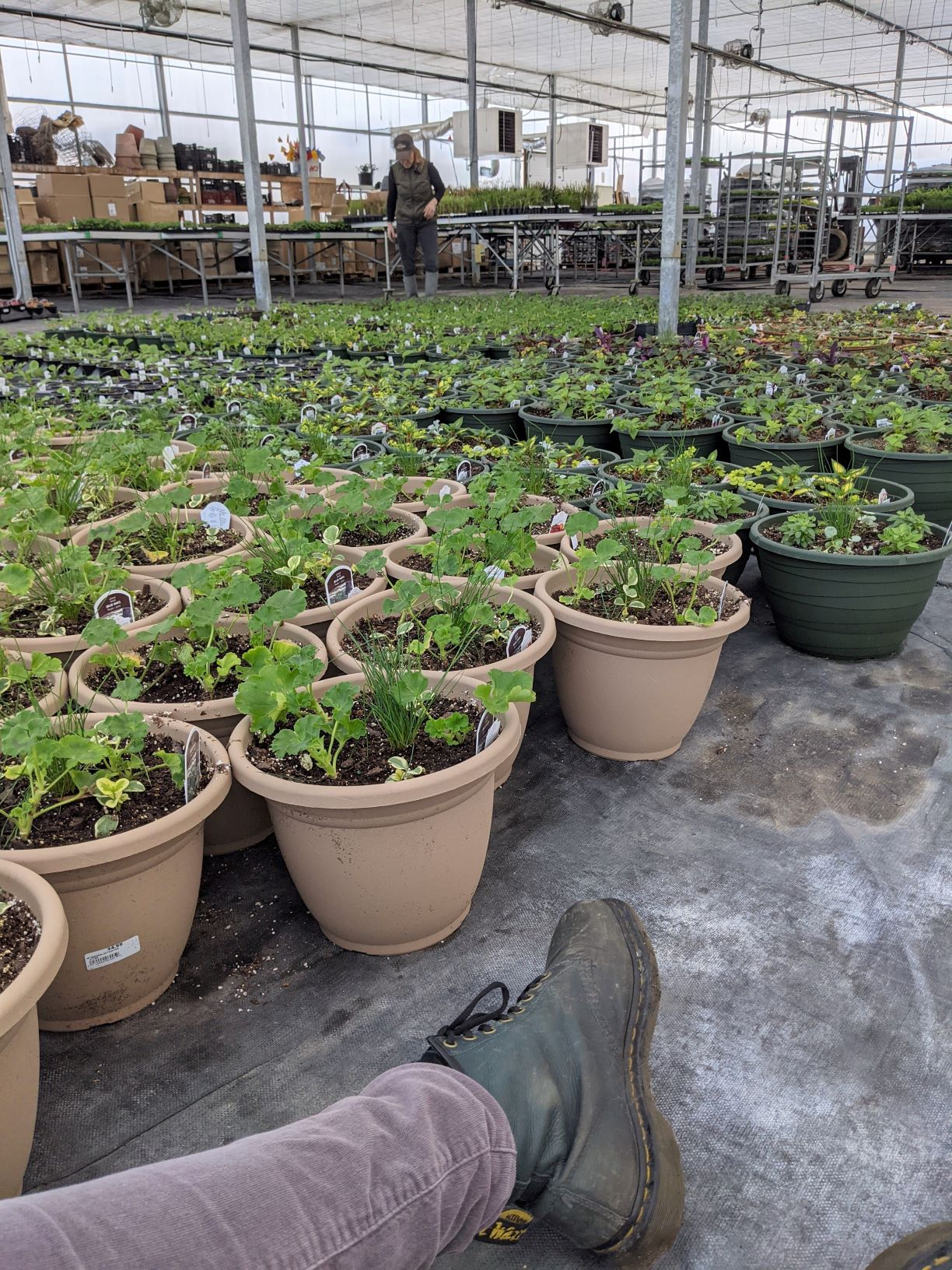 sitting view of the potted containers in the growing greenhouse