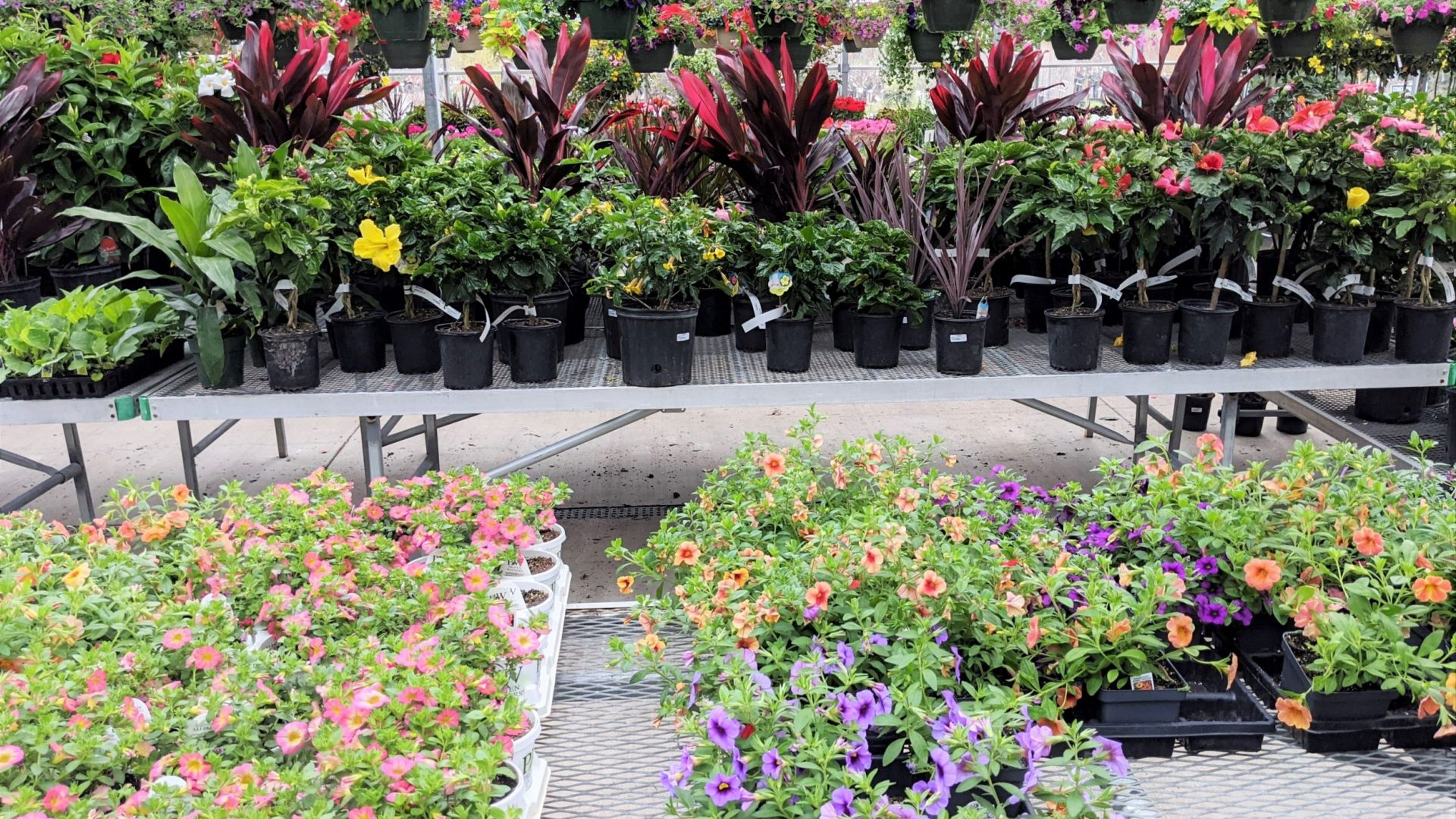 tropicals and annuals in the greenhouse