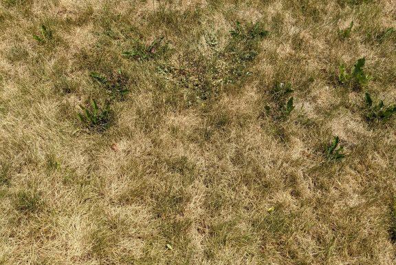dormant grass