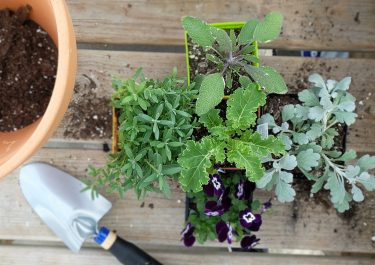 mix of herbs, flowers, and decorative plants in a container with a pot and a trowel